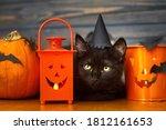 Happy Halloween. Black Evil Cat ...