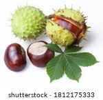 Group Of Horse Chestnut Fruits...