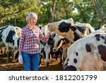 Farmer Woman On Cow Farm Around ...