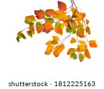 Autumn Branches With Small...