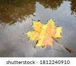 Close-up of yellow maple leaf lying in a puddle after rain. The concept of the end of summer, the beginning of autumn and a sad mood. The season of cold rainy weather and colds and flu. - stock photo