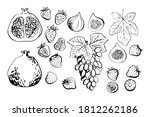 vector light fruit line... | Shutterstock .eps vector #1812262186
