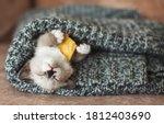 Autumn  Fall. Kitten Sleep On...