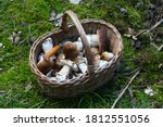 Harvest Of Bolete In A Basket...