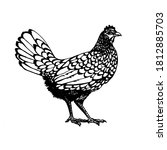 Rooster Vector Graphics ....