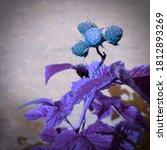 Unnatural Blue Ultra Color Of...