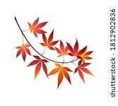 red maple tree leaves vector... | Shutterstock .eps vector #1812902836