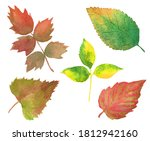 set of watercolor autumn leaves ...   Shutterstock . vector #1812942160