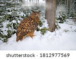Eurasian Eagle Owl With Snow In ...