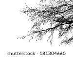 black alder tree branches...