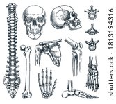 human skeleton  bones and...   Shutterstock .eps vector #1813194316