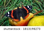 Colorful Butterfly Admiral...