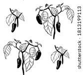 vector black and white seamless ... | Shutterstock .eps vector #1813199113