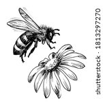 Flying Bee And Flower. Ink...