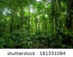 tropical rainforest landscape ... | Shutterstock . vector #181331084