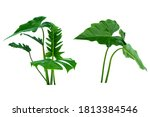 Monstera And Fern Plant Leaves...