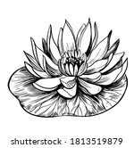 water lily. lotus. hand drawn... | Shutterstock .eps vector #1813519879