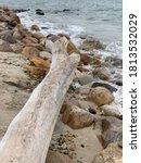 Driftwood On Beach With Rocks....