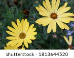 Beautiful yellow flowers shot on a canon eos m50