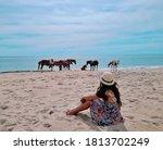 Wild horses of Assateague Island National Seashore