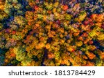 Colorful Autumn Forest Trees...