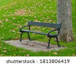 Small photo of Autumn falling leaves with dark green bench and plane tree trunk at Pioneer Women's Memorial Garden and Torrens Parade Ground in Adelaide (High-Resolution Photo)
