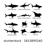 collection of shark set vector... | Shutterstock .eps vector #1813890260