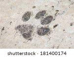 Paw Print On Concrete