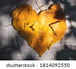 Sun Shines On Yellow Leaves...