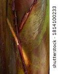 Banana Tree Green Bark Texture