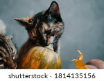 Two Cats And A Ripe Pumpkin On...