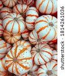 White And Orange Mini Pumpkins...
