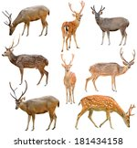 collection of deer isolated on... | Shutterstock . vector #181434158