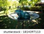 Ceramic Frog In A Garden