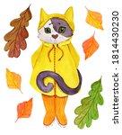 Kitten In A Yellow Raincoat An...