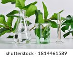 Natural Drug Research  Plant...