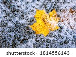 Autumn Maple Leaf In Water...