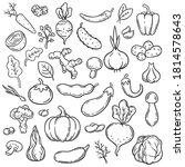 doodle vegetables. hand drawn...   Shutterstock .eps vector #1814578643