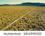 wooden path through the swamp | Shutterstock . vector #1814590520