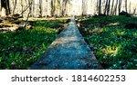 wooden path through the swamp | Shutterstock . vector #1814602253