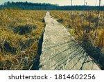 wooden path through the swamp | Shutterstock . vector #1814602256