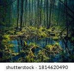 swamp in the spring woods | Shutterstock . vector #1814620490