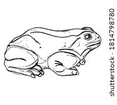 Frog Or Toad In Profile. Hand...