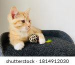 Little Red Cute Kitten With...
