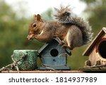 Squirrel Climbs Over A Bird...