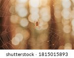 Spider In A Web On The...