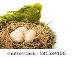 Nest With Egg On A White...