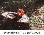 Ceramic Pumpkin Jack Lantern On ...