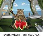A Beige Big Eyed Cat Eats A...