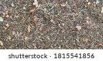 Autumn Bround Texture. Forest...